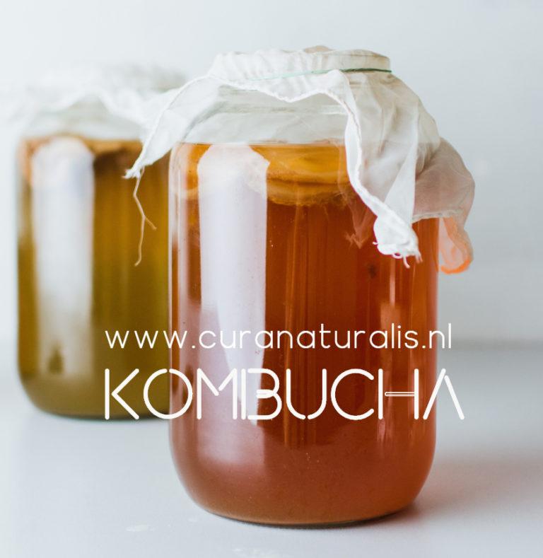 aanmelding workshop Kombucha